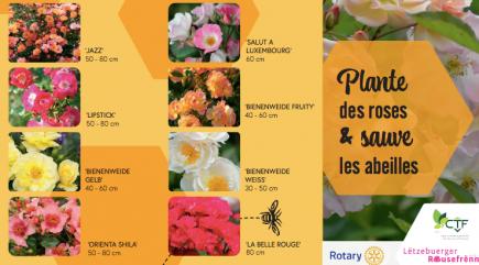 Un beau projet dans l'intérêt de la biodiversité et de la pollinisation